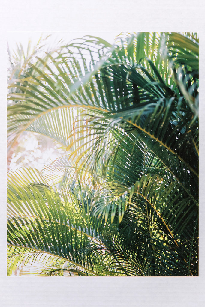 BEAUTI photography travel photographer Wall Art palm leaves lustre print