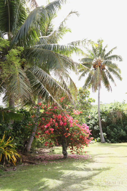 BEAUTI photography travel photographer Wall Art Rarotonga Cook Islands palm trees bougainvillea
