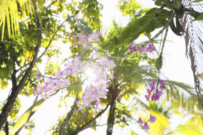 BEAUTI photography travel photographer Wall Art Panama City orchids sunburst