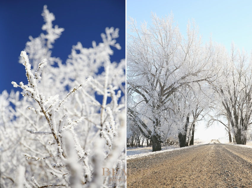 Tribune Saskatchewan lifestyle photographer outdoor winter frosty trees prairie winter scenery trees arched over road winter solstice photo