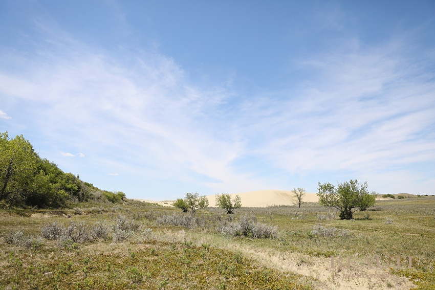BEAUTI photography Great Sandhills Park explore Saskatchewan parks Sandhills sand dunes trail prairie scenery travel adventure road less travelled explore Sask scenery photography photo