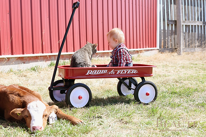 BEAUTI photography Tribune SK photographer baby photography family lifestyle photographer one year photos little red wagon baby calf farm cat photo